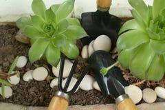 Två lilla gräsplanflåsanden i kruka av stenen med bladbrottningjord Royaltyfria Foton