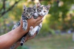 Två lilla härliga kattungar på a mans handen med suddig gräsplan b Fotografering för Bildbyråer