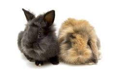 Två lilla kaniner som isoleras på vit arkivfoto