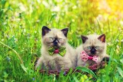Två lilla kattungar i en korg fotografering för bildbyråer