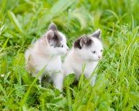 Två lilla kattungar på det gröna gräset bort se Royaltyfri Bild