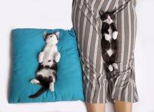 Två lilla kattungar sover sött royaltyfria foton