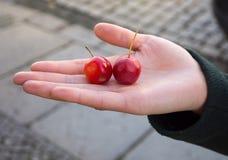 Två lilla nya röda äpplen fångar krabbor i en kvinnlig hand i ett mörker - gräsplan Royaltyfria Foton