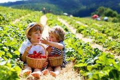 Två lilla siblingpojkar på jordgubben brukar i sommar arkivfoto