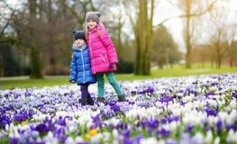 Två lilla systrar som väljer krokusblommor på härlig blommande krokusäng på den tidiga våren Royaltyfria Bilder