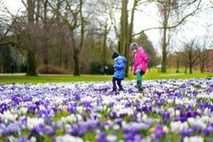 Två lilla systrar som väljer krokusblommor på härlig blommande krokusäng på den tidiga våren Fotografering för Bildbyråer