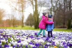 Två lilla systrar som väljer krokusblommor på härlig blommande krokusäng på den tidiga våren Royaltyfri Fotografi