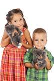 Två lilla ungar rymma gråa kattungar royaltyfria foton