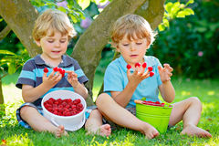 Två lilla vänner, ungepojkar som har gyckel på hallonlantgård i sommar royaltyfria bilder