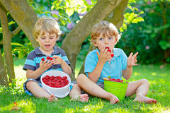 Två lilla vänner, ungepojkar som har gyckel på hallonlantgård i sommar royaltyfri fotografi