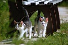 Två lite katter arkivbild