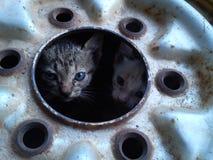Två lite katter arkivfoto