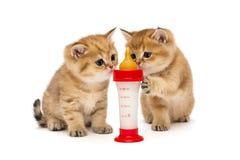 Två liten röd kattunge och flaska av mjölkar Arkivbilder