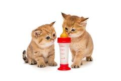 Två liten röd kattunge och flaska av mjölkar Royaltyfria Bilder