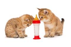 Två liten röd kattunge och flaska av mjölkar Royaltyfri Bild