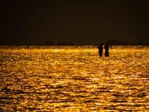 Två män i det guld- havet på solnedgången Royaltyfri Fotografi