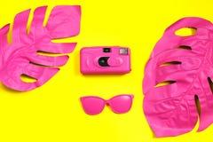 Två målade den rosa tropiska palmbladet av kameran och solglasögon för monsteramodefilm och på gul bakgrund minimalism royaltyfria foton