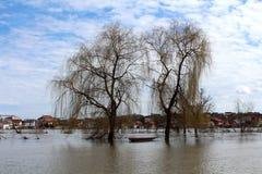 Två massiva träd med flodfartyget som omges med den översvämmade floden Arkivfoto