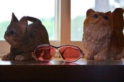 Två modellkatter med sunglass fotografering för bildbyråer