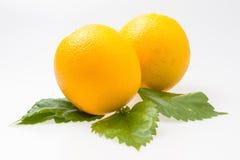 Två mogna isolerade apelsiner Royaltyfri Fotografi