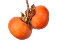 Två mogna persimmonfrukter som hänger från en tree arkivfoto