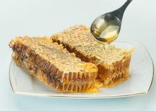 Två mogna stycken av honungskakan royaltyfri bild