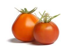 Två mogna tomater Royaltyfri Bild