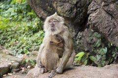 Två monkeys2 Fotografering för Bildbyråer