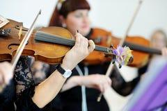 Två musiker som spelar fioler Arkivfoto