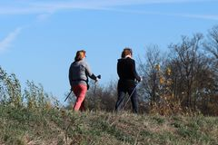 Två myndiga kvinnor kopplas in i nordiskt gå i natur i hösten Aktivitet av äldre folk för en sund livsstil sportar royaltyfria foton