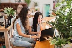 Två nätta slanka flickor med långt mörkt hår, bärande tillfällig stil, sitter på tabellen och ser uppmärksamt på bärbara datorn arkivbilder