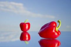 Två nya röda peppar avspeglar på fotografering för bildbyråer
