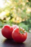 Två nya tomater Royaltyfri Foto