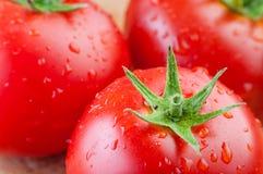 Två nya tomater med vattendroppar Arkivfoton