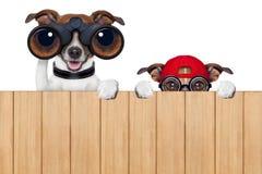 Två nyfikna hundkapplöpning arkivbild