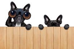 Två nyfikna hundkapplöpning Royaltyfria Foton