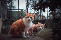 Två nyfikna katter Royaltyfria Bilder