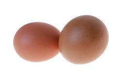 Två olika ägg fotografering för bildbyråer