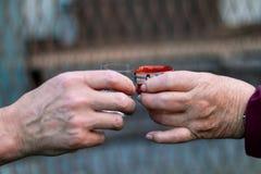 Två olika personer som rostar till hälsa, och goda som är harvesty i deras lifes Händer av kvinnan och mannen rymmer exponeri royaltyfri foto