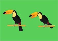 Två olika sorter av tukan royaltyfri illustrationer