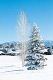 Dolda trees för Snow Arkivfoton