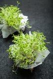 Två packar av mikro-gräsplaner grönsallat på en svart bakgrund, vertikalt fotografering för bildbyråer