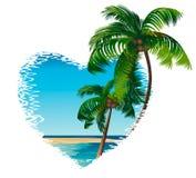 Två palmträd 库存照片