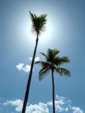 Två palmträd mot himlen med moln Royaltyfri Bild