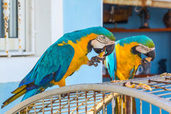 Två papegojor på cellen Arkivfoton