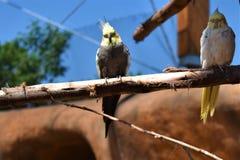 Två papegojor som sitter på lövruskan i aviarium royaltyfri foto