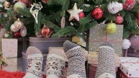 Två par av ben i varma woolen sockor bredvid en härlig julgran stock video