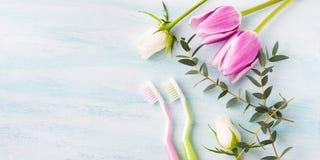 Två pastellfärgade tandborstar med blommaörter bakgrund colors vit yellow för den nya gröna tvätterifjädern Royaltyfria Bilder