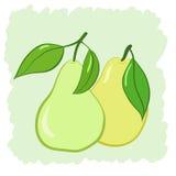 Två pears Royaltyfri Fotografi