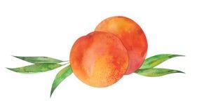 Två persikor och sidor Royaltyfri Foto